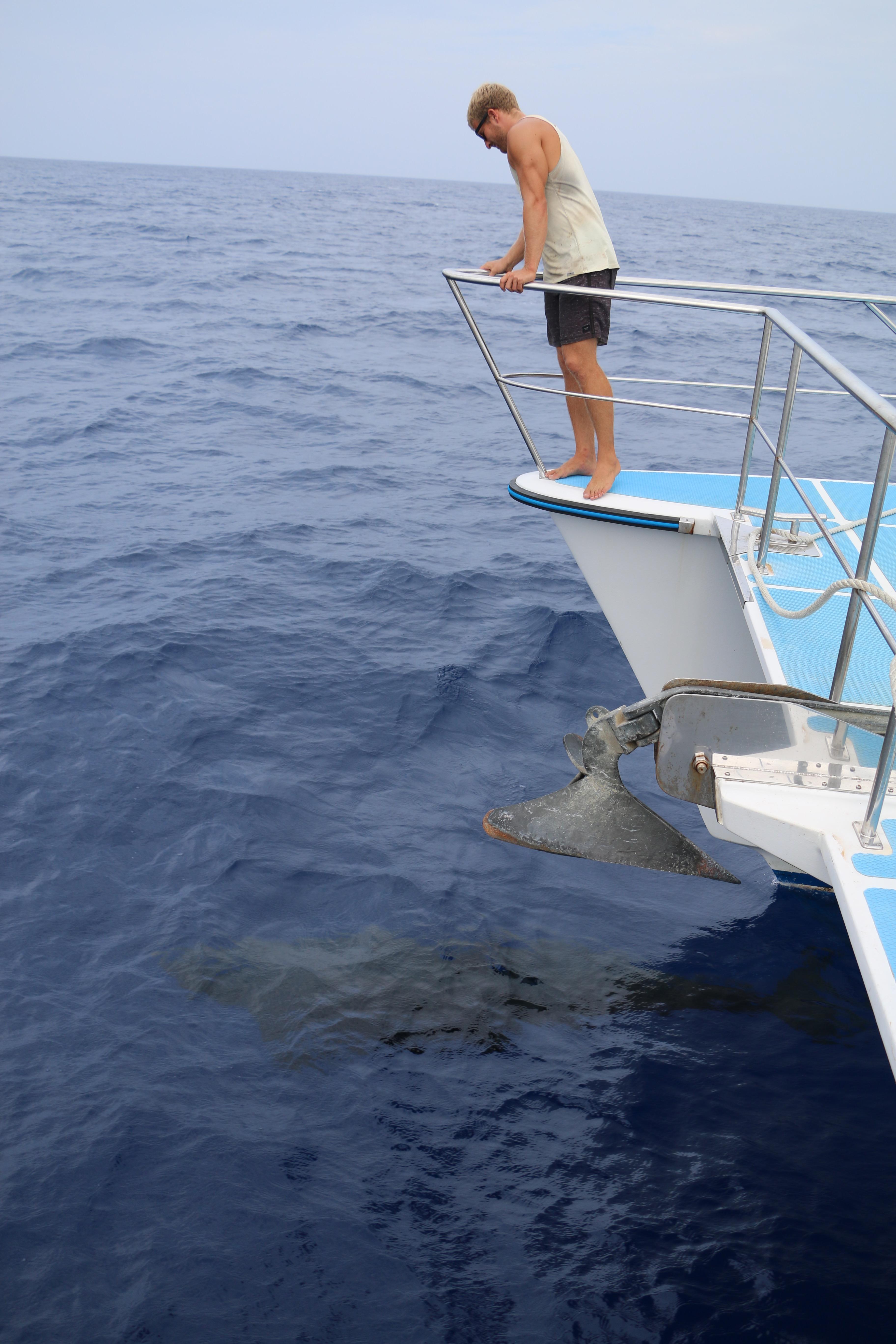 pilot whale vanuatu