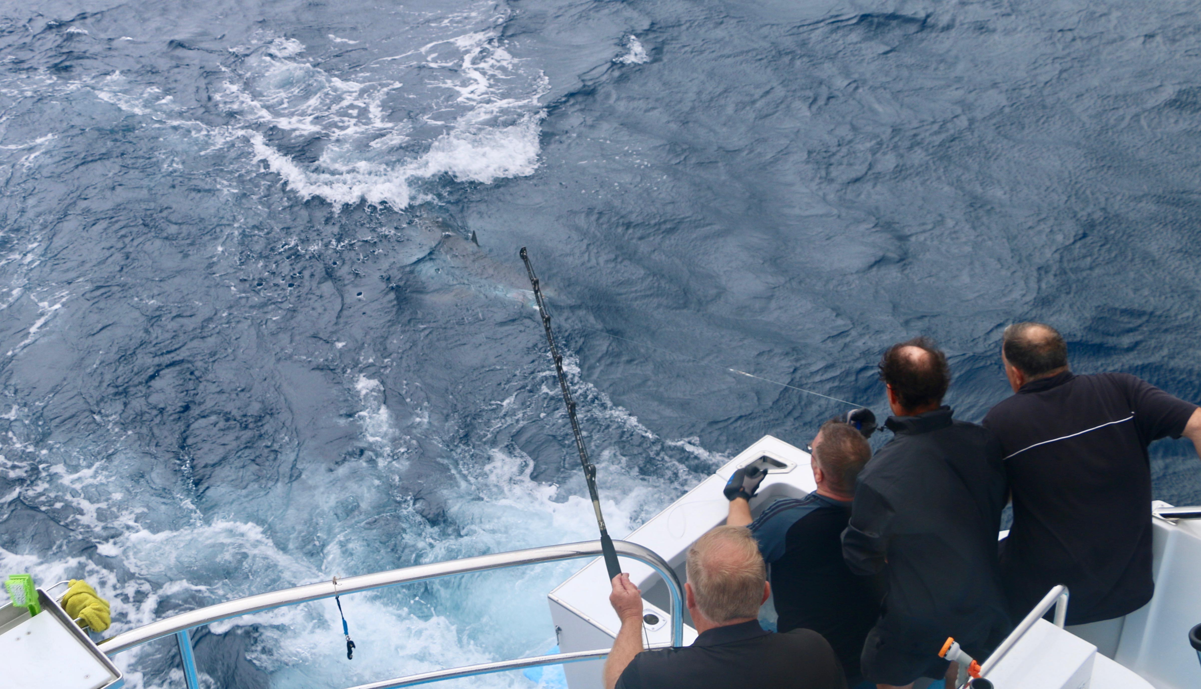 Mako_sport-fishing