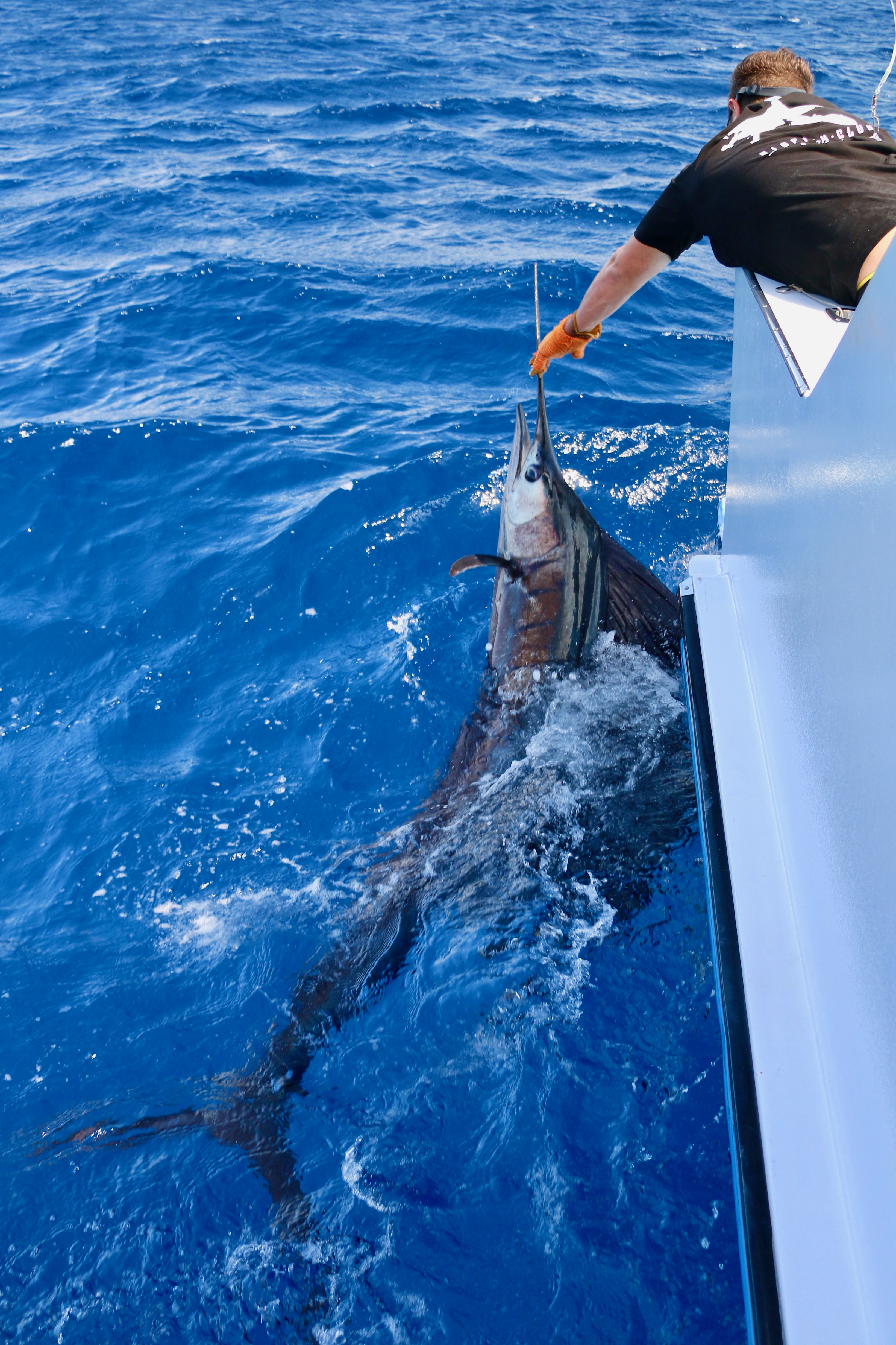 Sailfish, New Caledonia