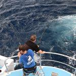 Whanganella Banks, November Rain, Striped Marlin Fishing