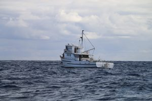 Destiny, Whanganella Banks, Fishing New Zealand, Striped Marlin,