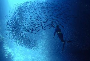 Swallow's Cave Tonga