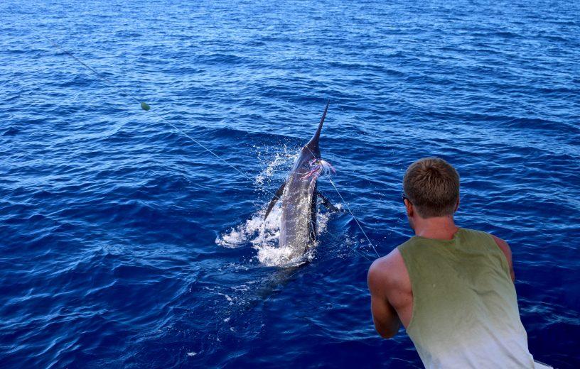 Blue Marlin Vanuatu