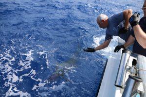 marlin fishing vanuatu