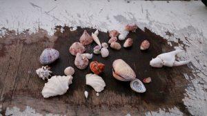 shells,