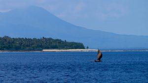 Vanuatu game fishing, sports fishing vanuatu, marlin fishing, charter fishing santo, charter fishing vanuatu,