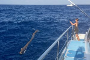 Floating dangers