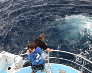 Whanganella Banks, November Rain, Striped Marlin Fishing