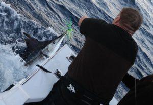 Whanganella Banks, November Rain, New Zealand sports fishing,