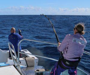 Whanganella Banks, November Rain, Striped Marlin sportsfishing, new zealand